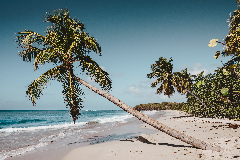 Déménagement en Martinique - Aux Déménageurs Méditerranéens - DOM TOM
